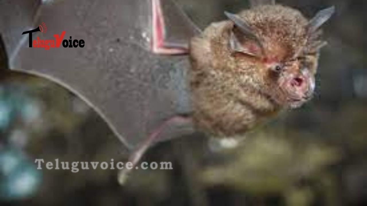 24 New Coronaviruses Find In Bats teluguvoice