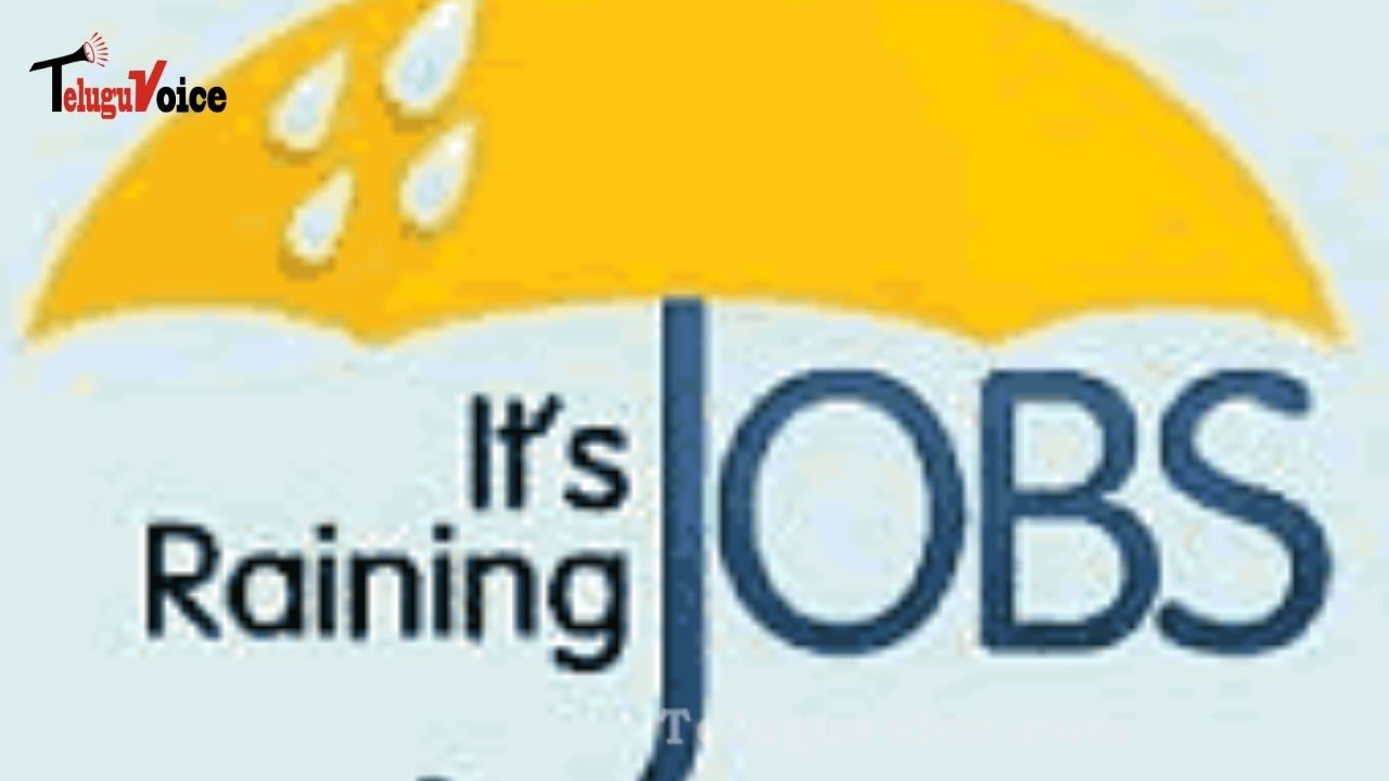 It's Raining Jobs In IT! teluguvoice